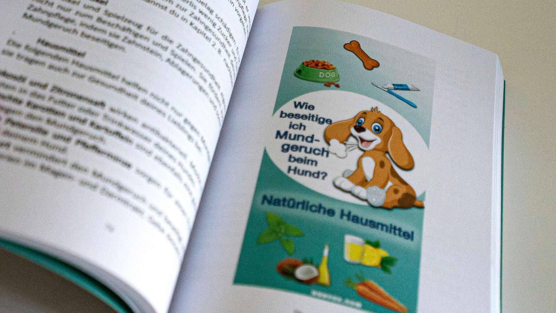 Hund-Mundgeruch